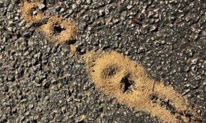 Greenwood fire ant control