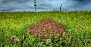 Abbeville SC fire ant control