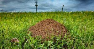 Greenwood SC fire ant control