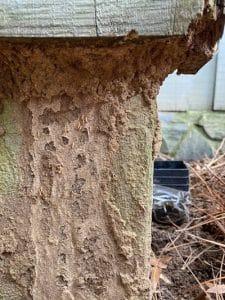 Greenwood SC termite infestation