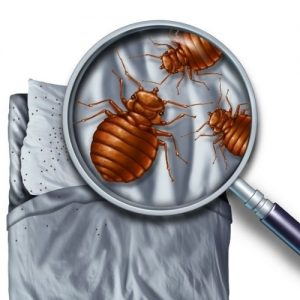 McCormick SC bed bug eradication